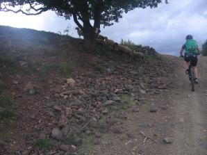 Languedoc okt 2012 133