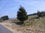 Hautes Fagnes road 044