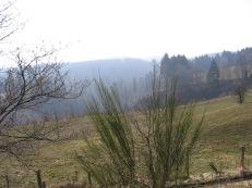 Hautes Fagnes road 053